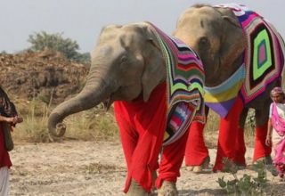 les-éléphants-678x381